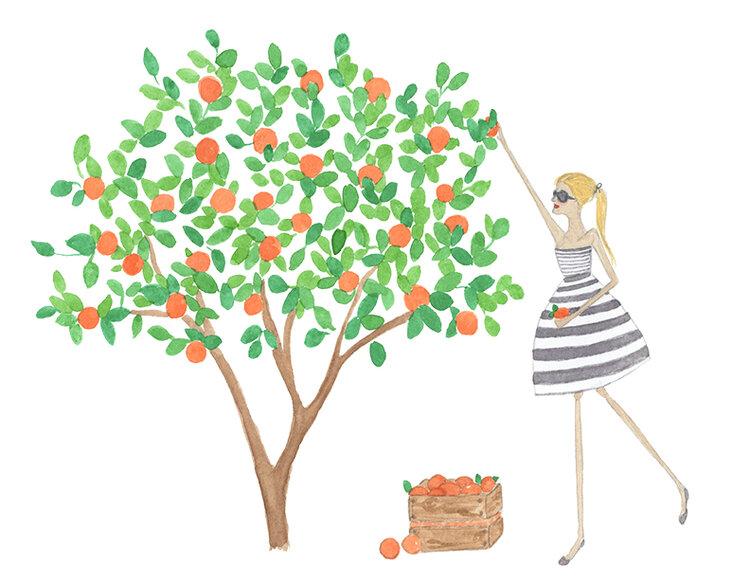 72 dpi orangetree.jpg