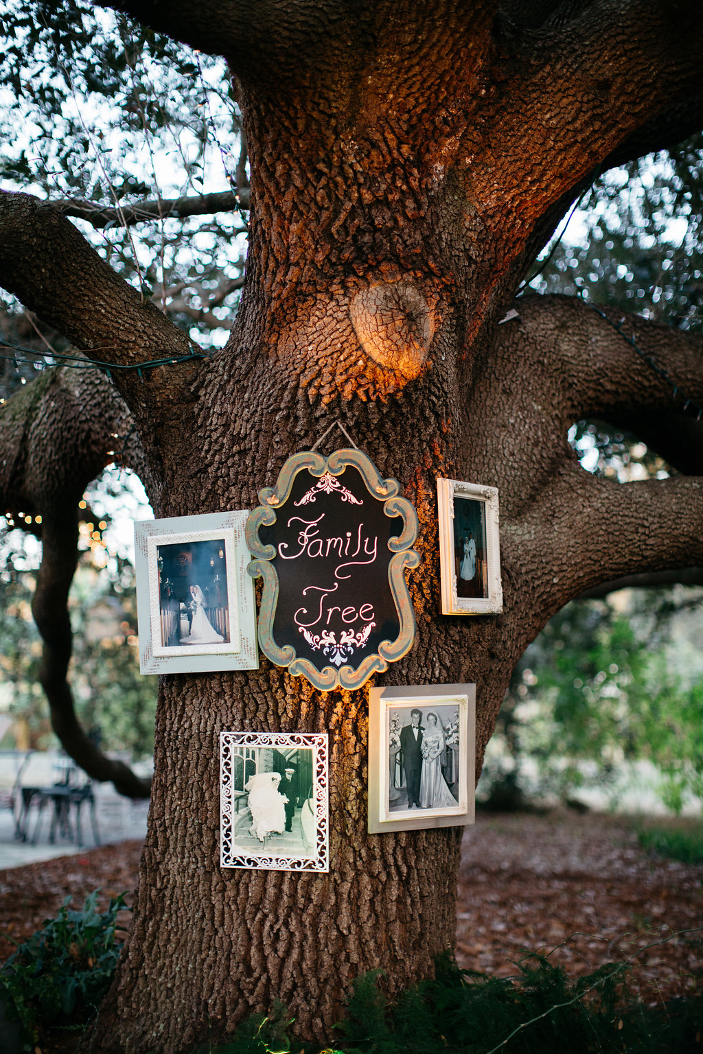 Family tree, Windermere Weddings