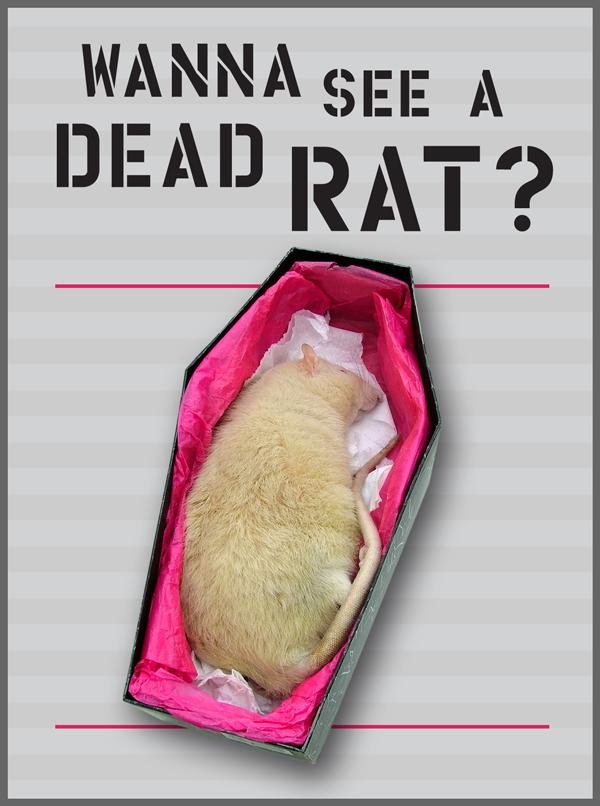 wanna-see-dead-rat