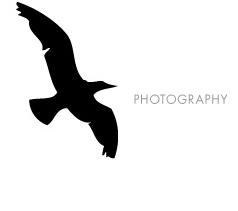 photo-v2.jpg