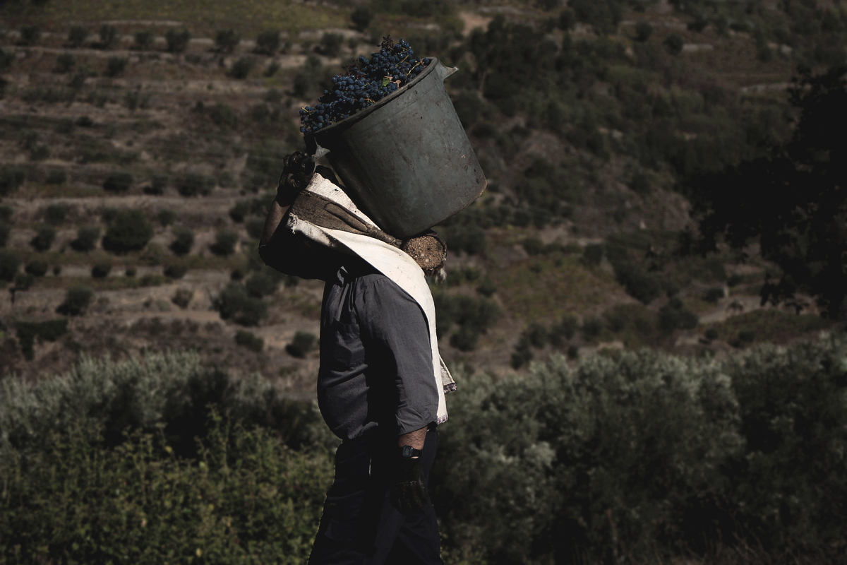 Vindima wine harvesting tradition tradicao Photography Fotografia Photojournalism bonjourmolotov Andre Gigante 05