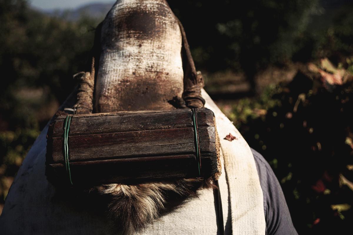 Vindima wine harvesting tradition tradicao Photography Fotografia Photojournalism bonjourmolotov Andre Gigante 06