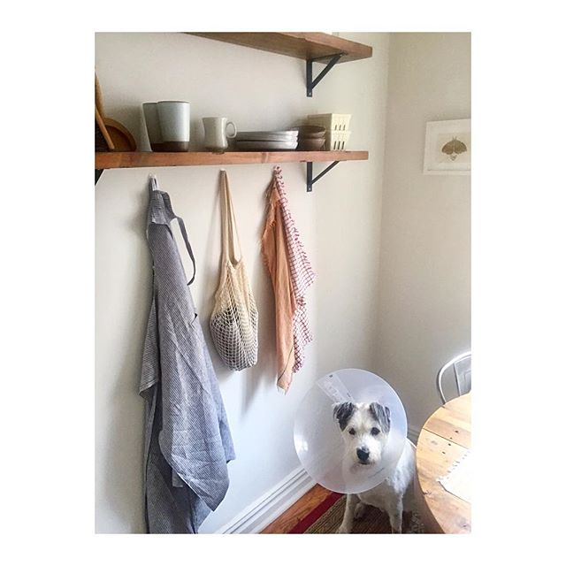There are cycles of expansion and cycles of contraction. Seasons for blooming and seasons for planting seeds. There are also periods in life where you have a cone around your head and your only job is to rest, heal, and have humans you love bring you breakfast 🍳🐶 #cruciateligament #arlodamico