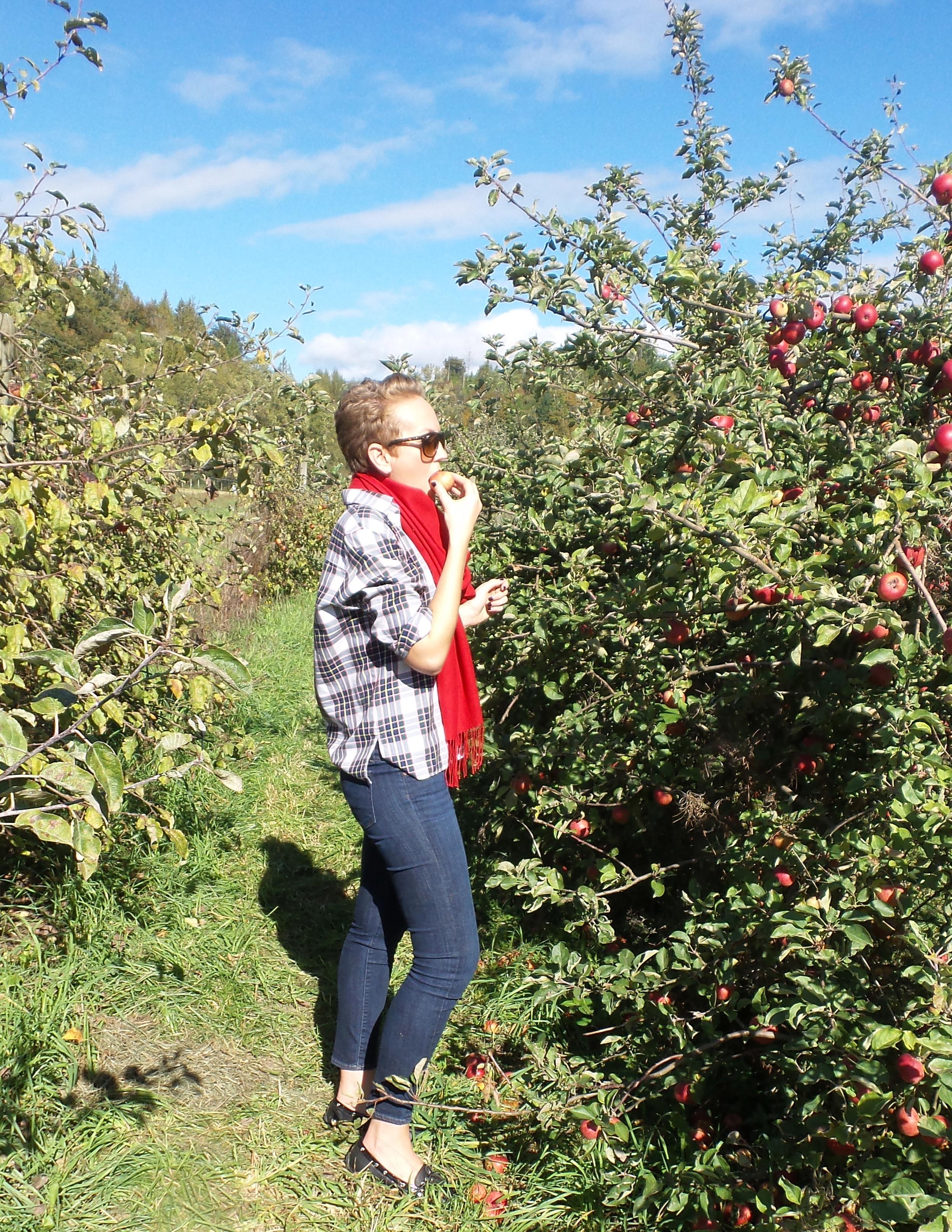 Picking apples at Jones Creek Farm in Sedro Woolley, Washington