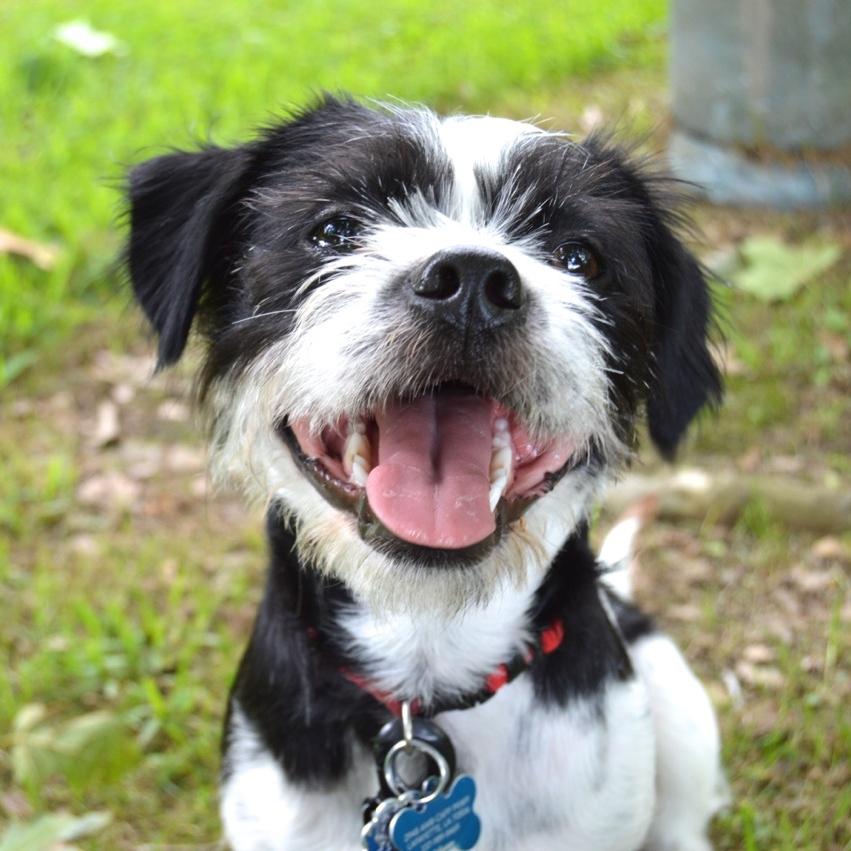 My Dog -