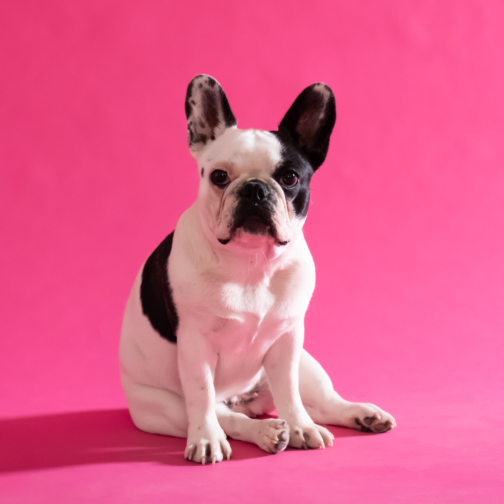 Zoe pink-1.jpg