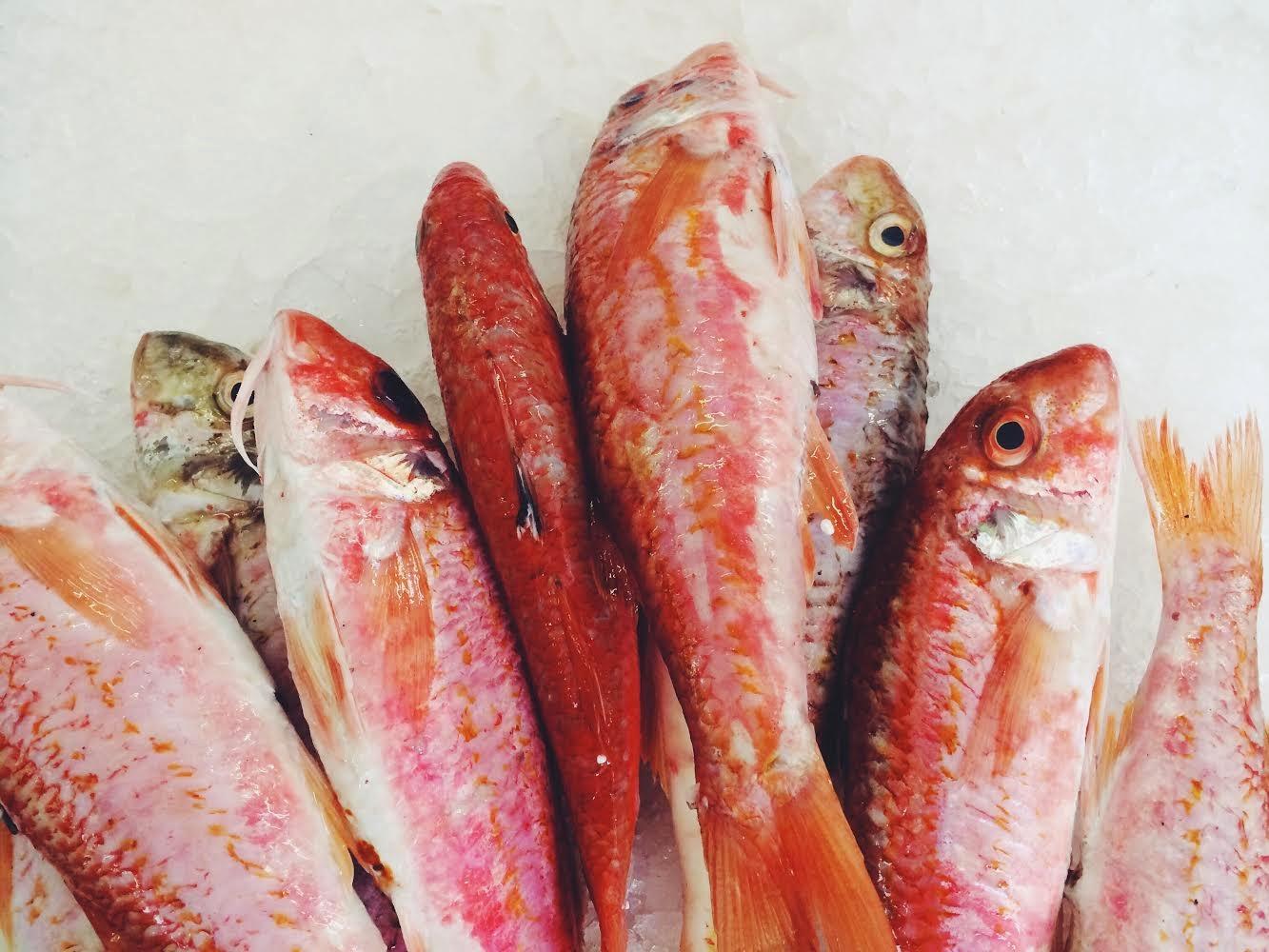 Um leque fantástico de  Mullus Surmuletus,  aquele peixe que passa a vida a vasculhar as areias do fundo do mar.