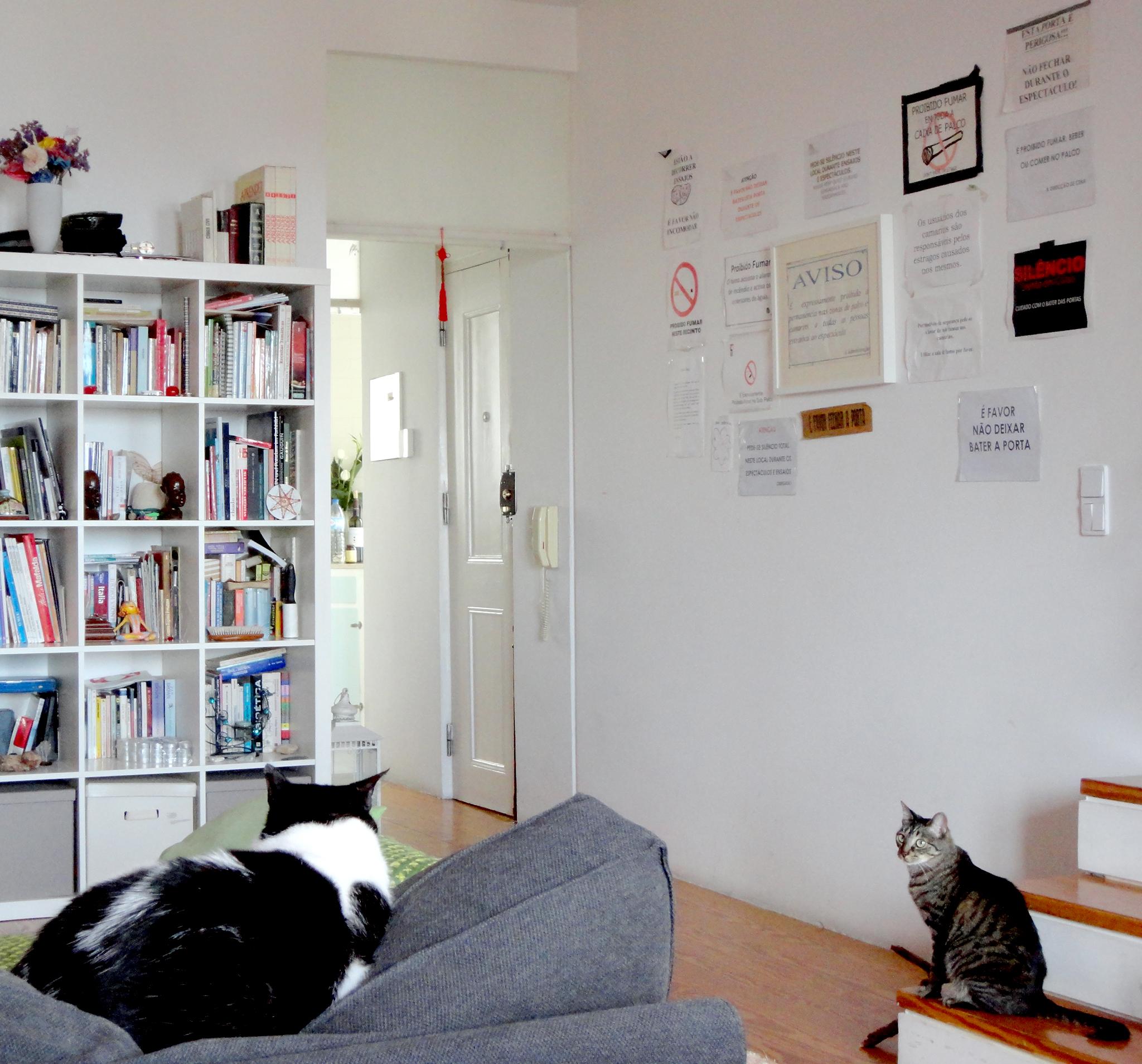 o tomé à esquerda a tita à direita, dois felinos sociáveis que gostam de receber atenção (um duma forma outro doutra).