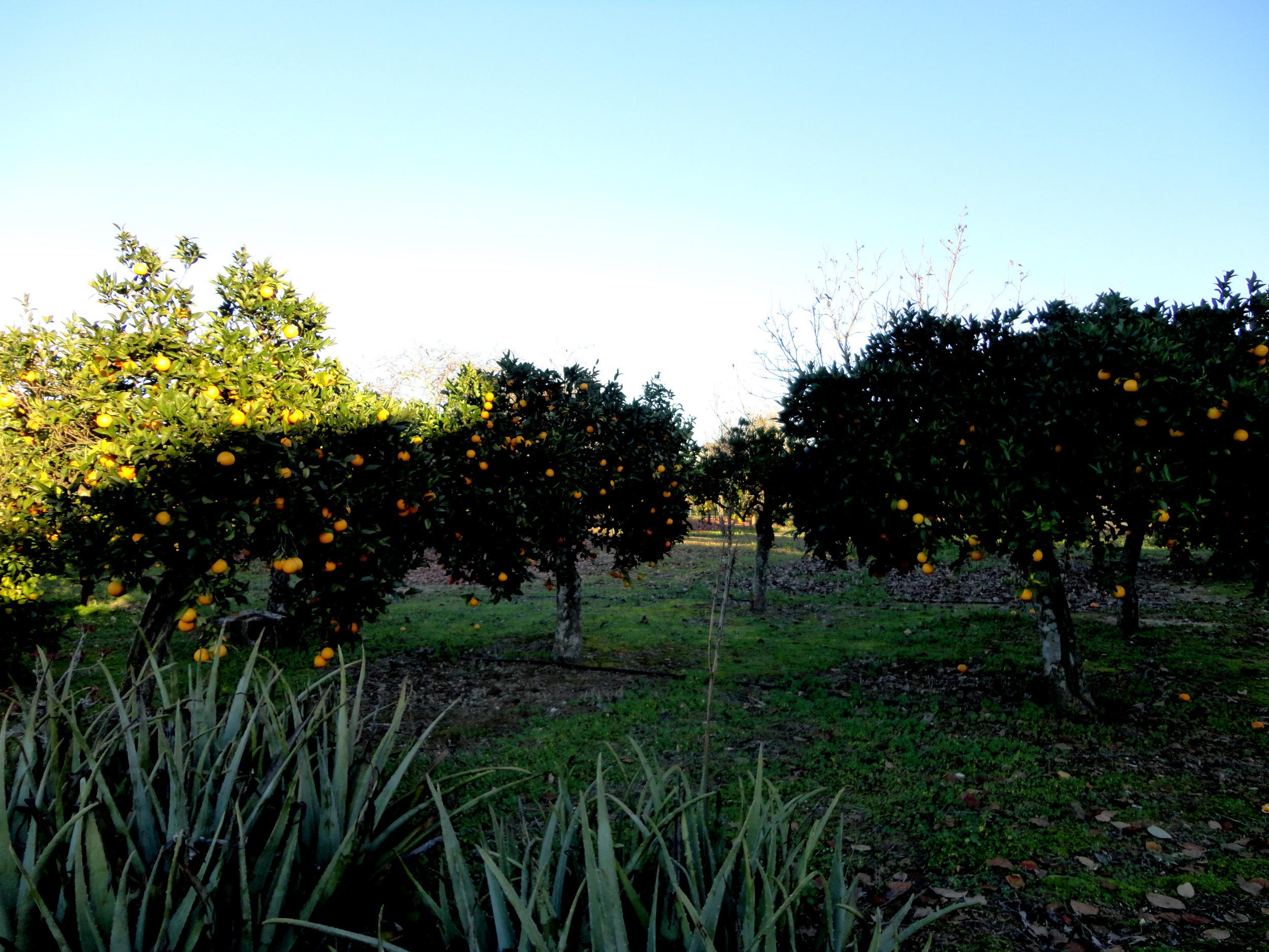 as sombras que me encantaram estes dias no Baixo Alentejo