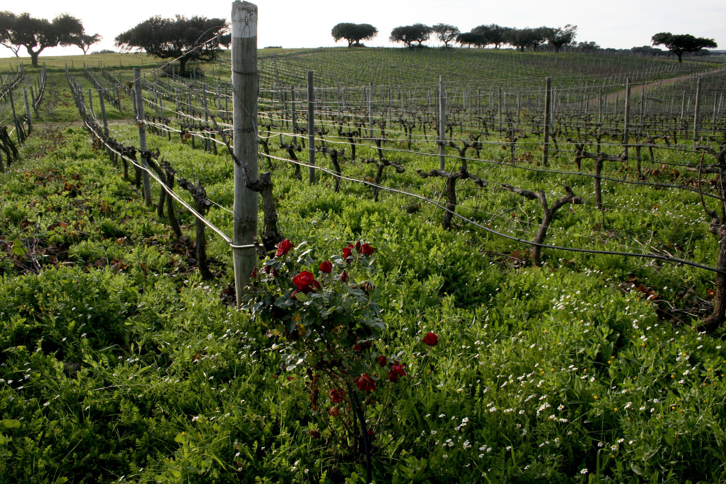 wine trip 2.jpg