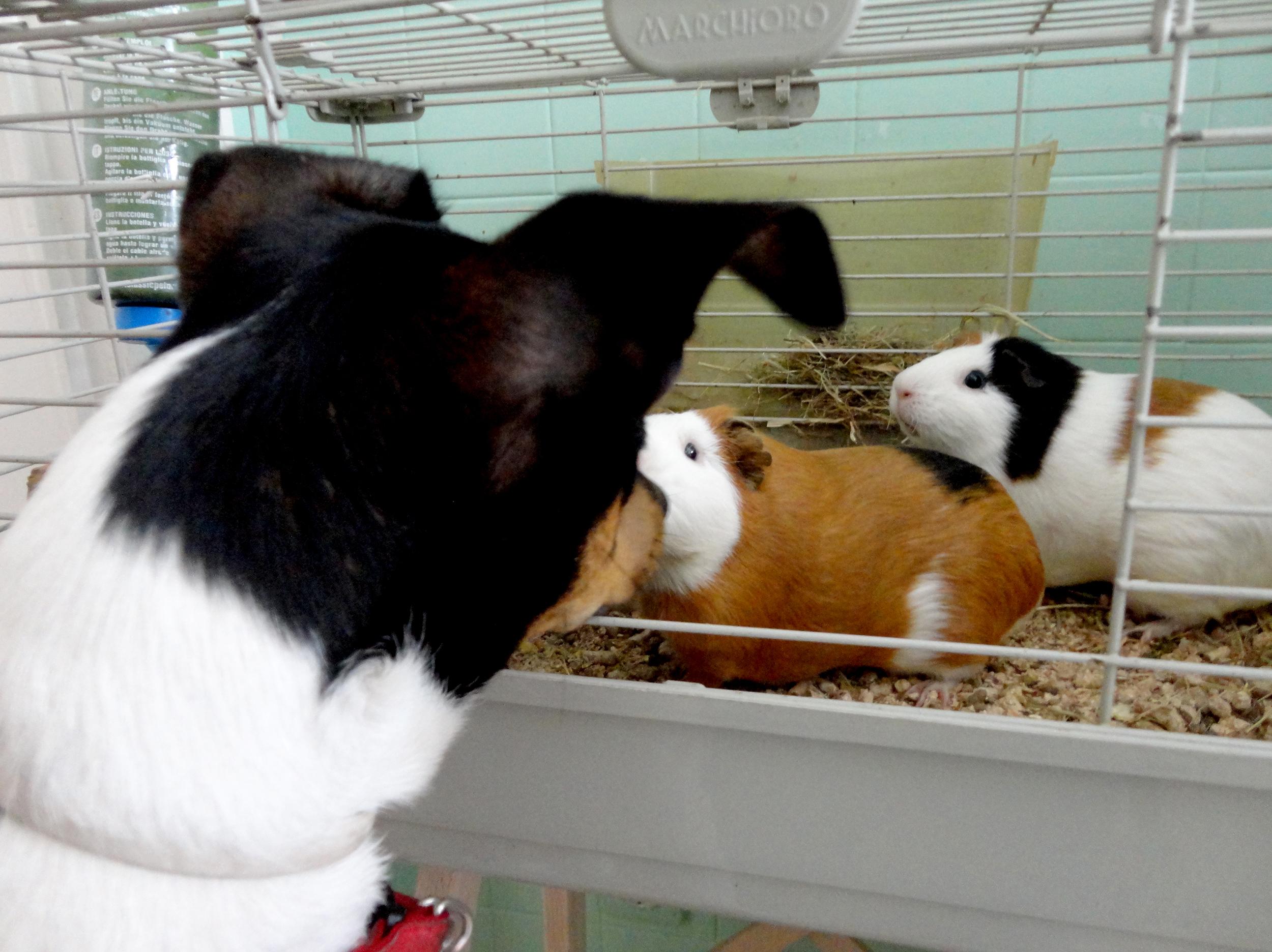 O Choné e os seus amigos de 4 patas