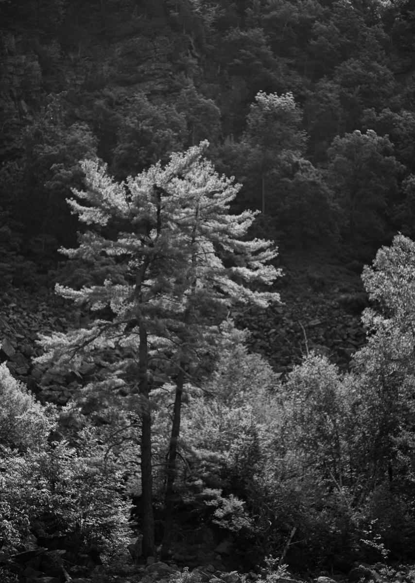 Vermont Parks 5-31-18-24.jpg