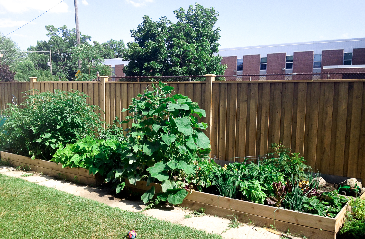 WithCare-Raised Beds-3710.jpg