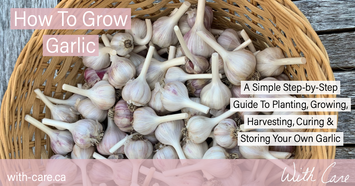 How To Grow Garlic FB.png