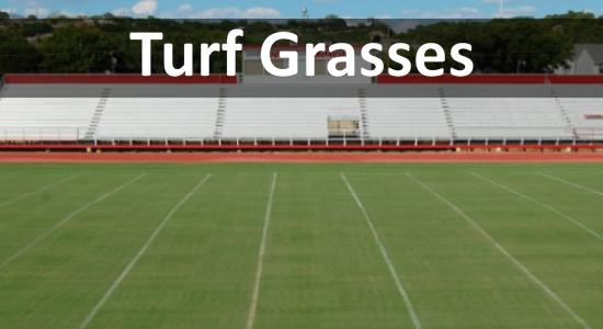 turf grass thumb.jpg