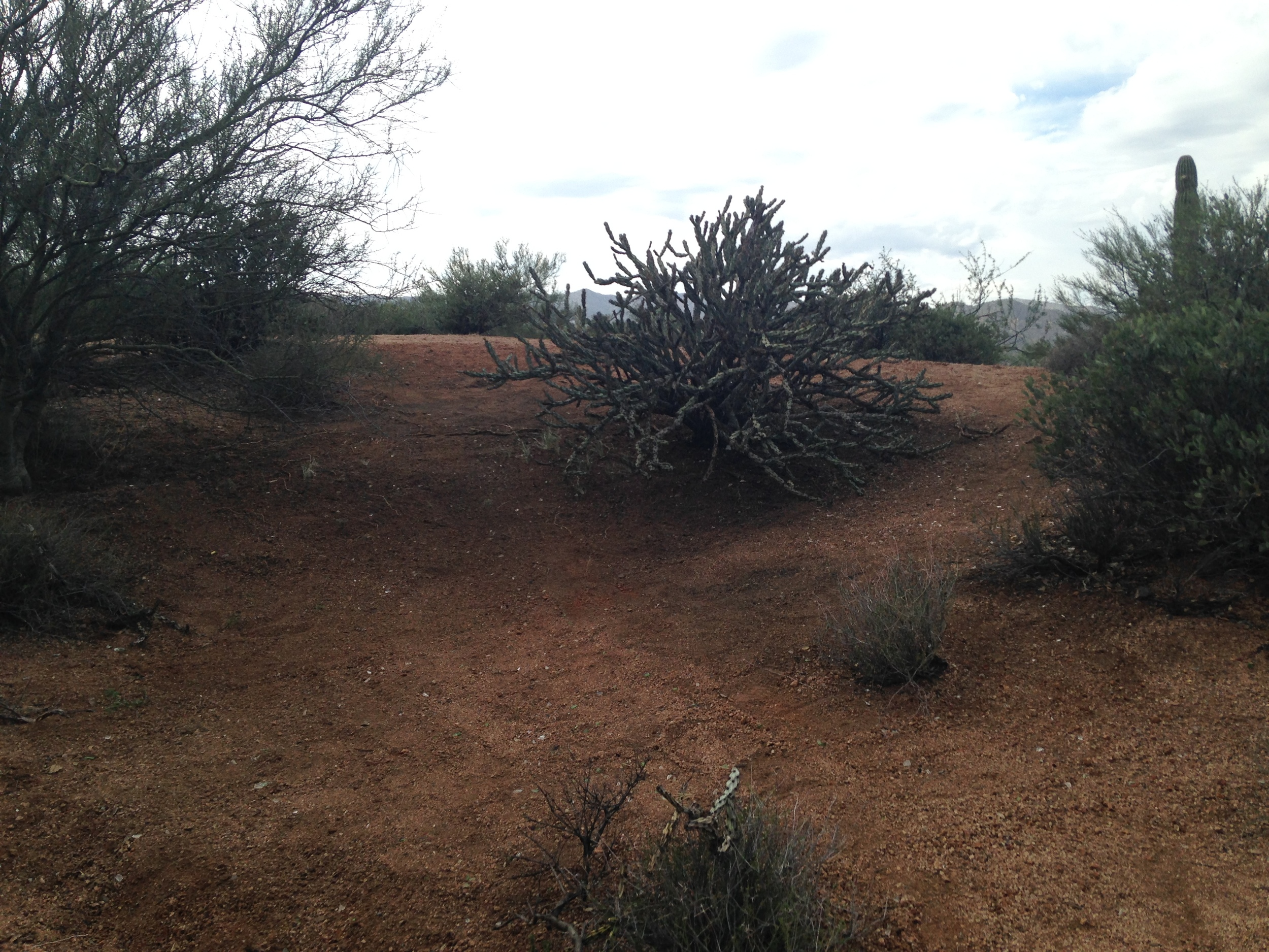 Site 4 After 2.JPG