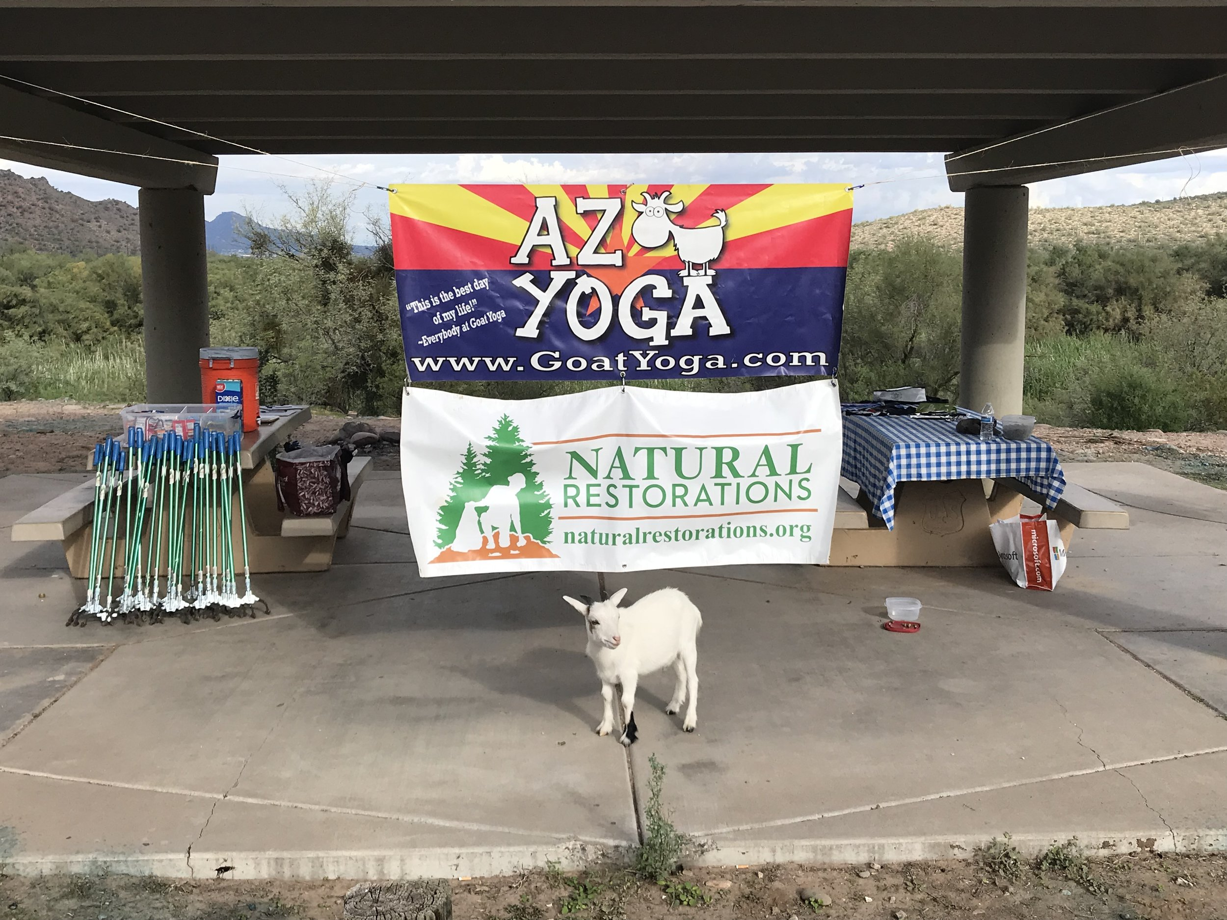 10/23/18 - Lower Salt River Plogging Cleanup AZ Goat Yoga and Visit Mesa.Click HERE to view the project.
