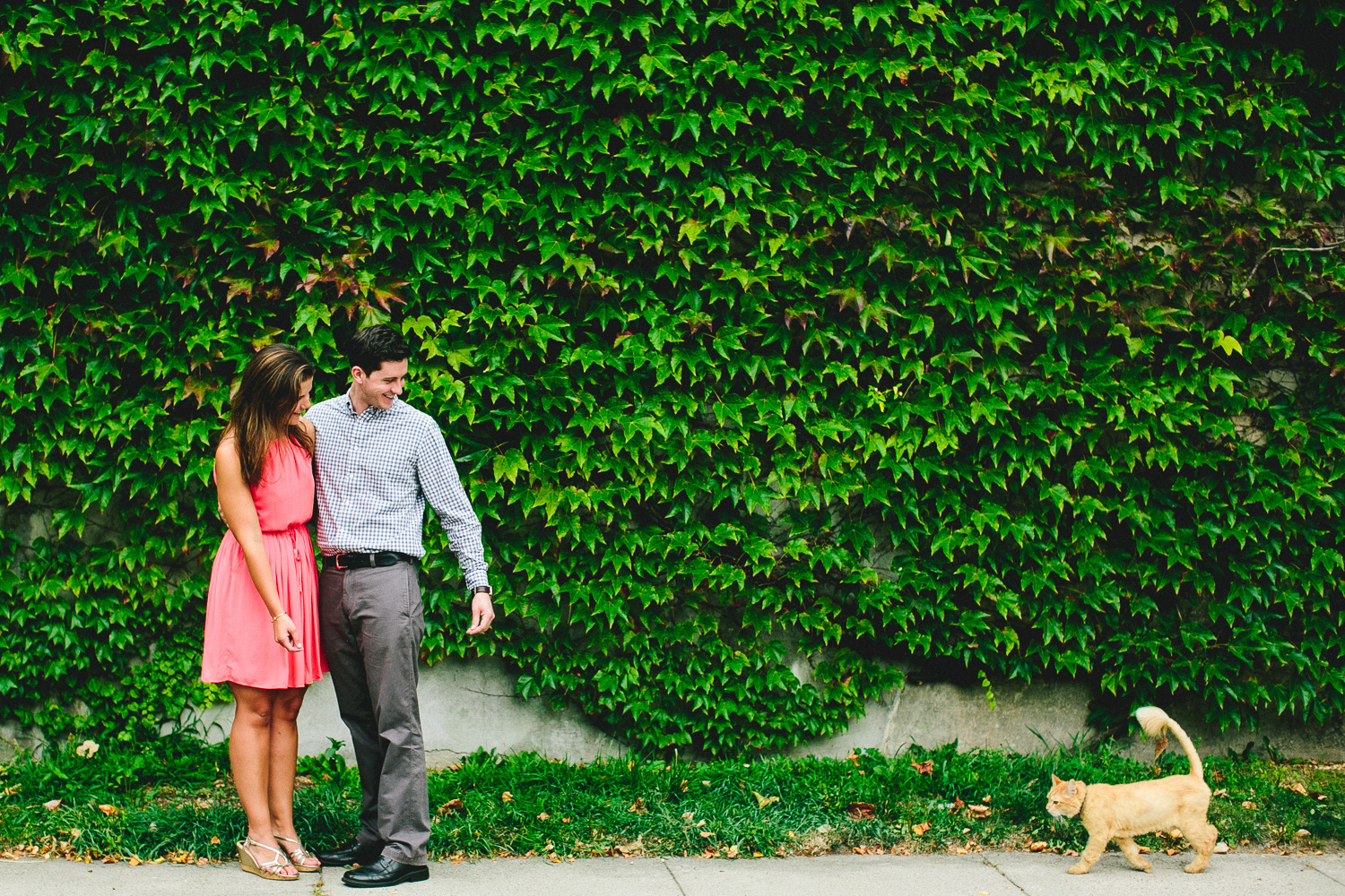 Stray Cat Engagement Session
