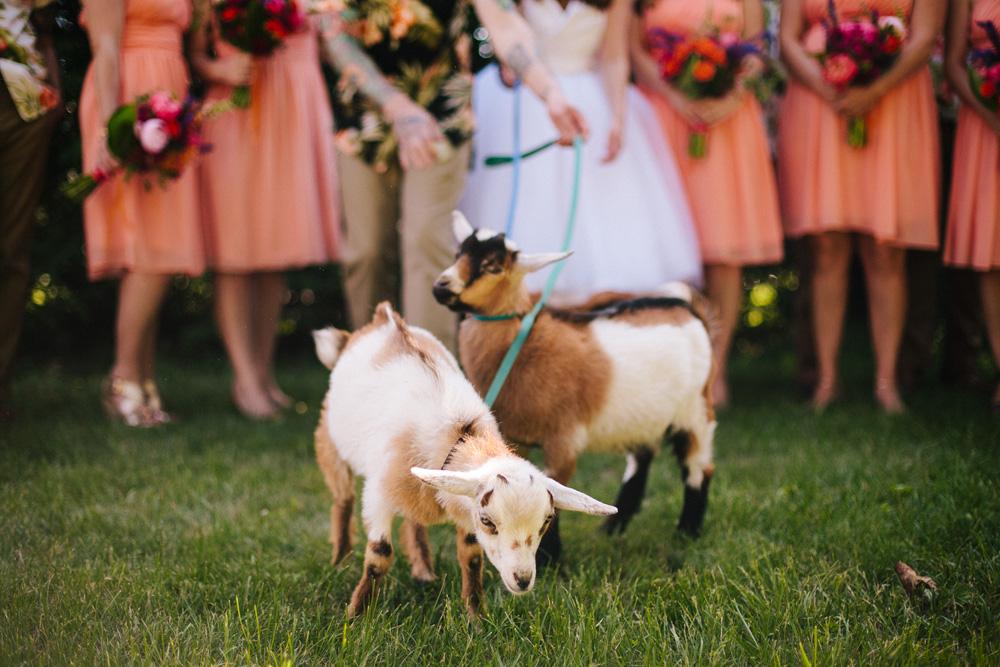 020-wedding-goats.jpg