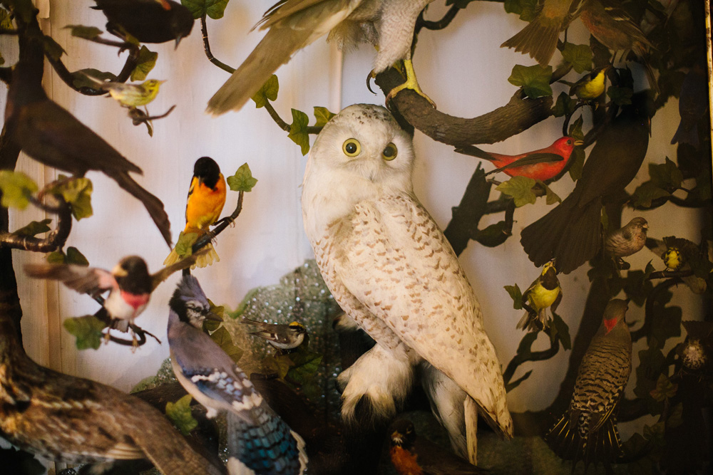003-habitat-wildlife-sanctuary-wedding.jpg