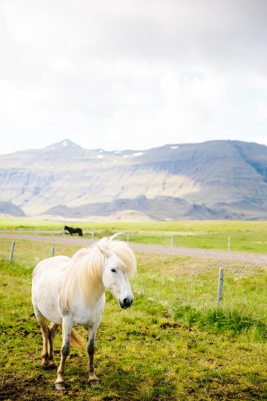 032-icelandic-ponies.jpg
