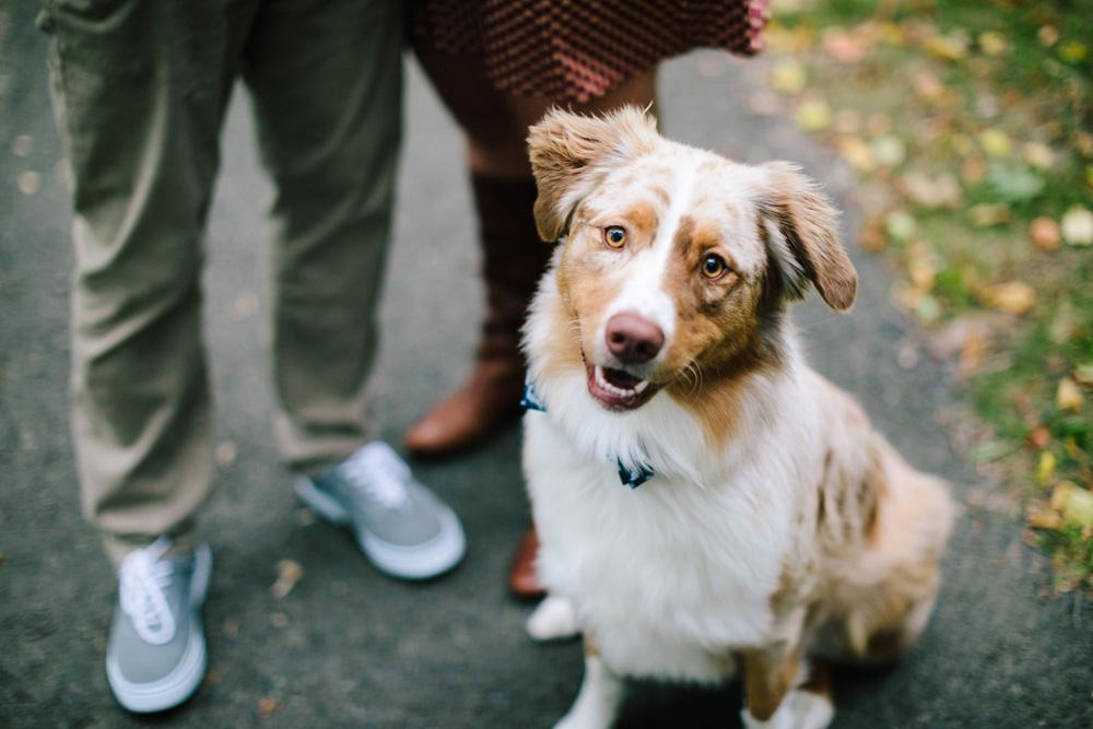 003-dog-engagement-photo.jpg