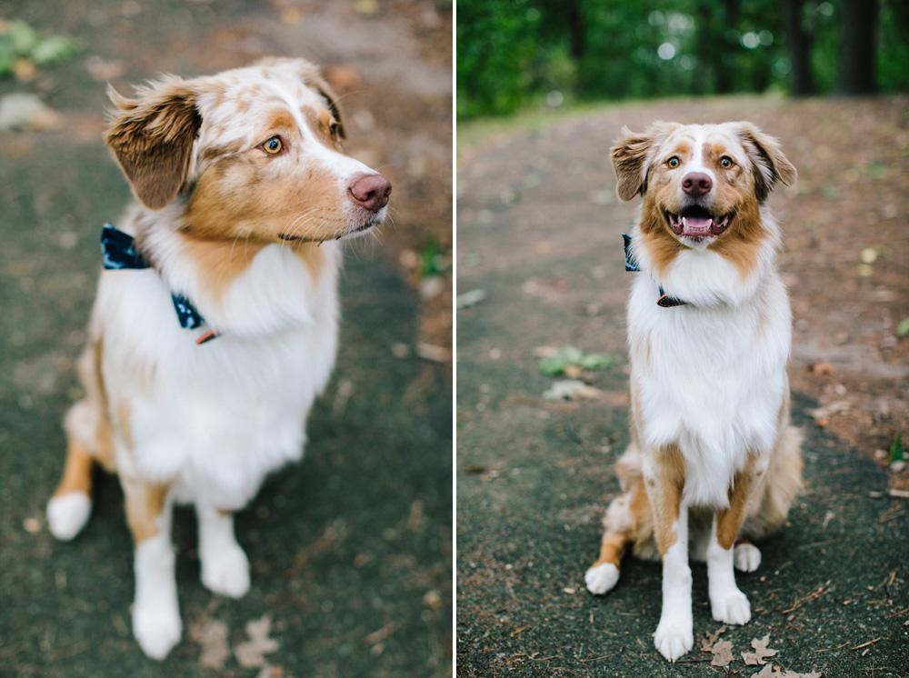 008-dog-engagement-photos.jpg