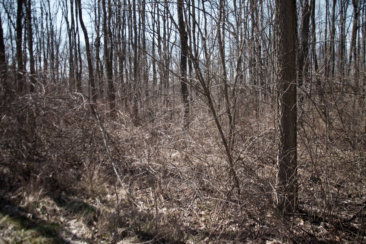 [March 11, 2012; Sharon Woods Metro Park, OH]