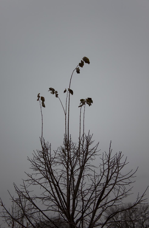 Clinging/Reaching     [December, 2011; Columbus, OH]