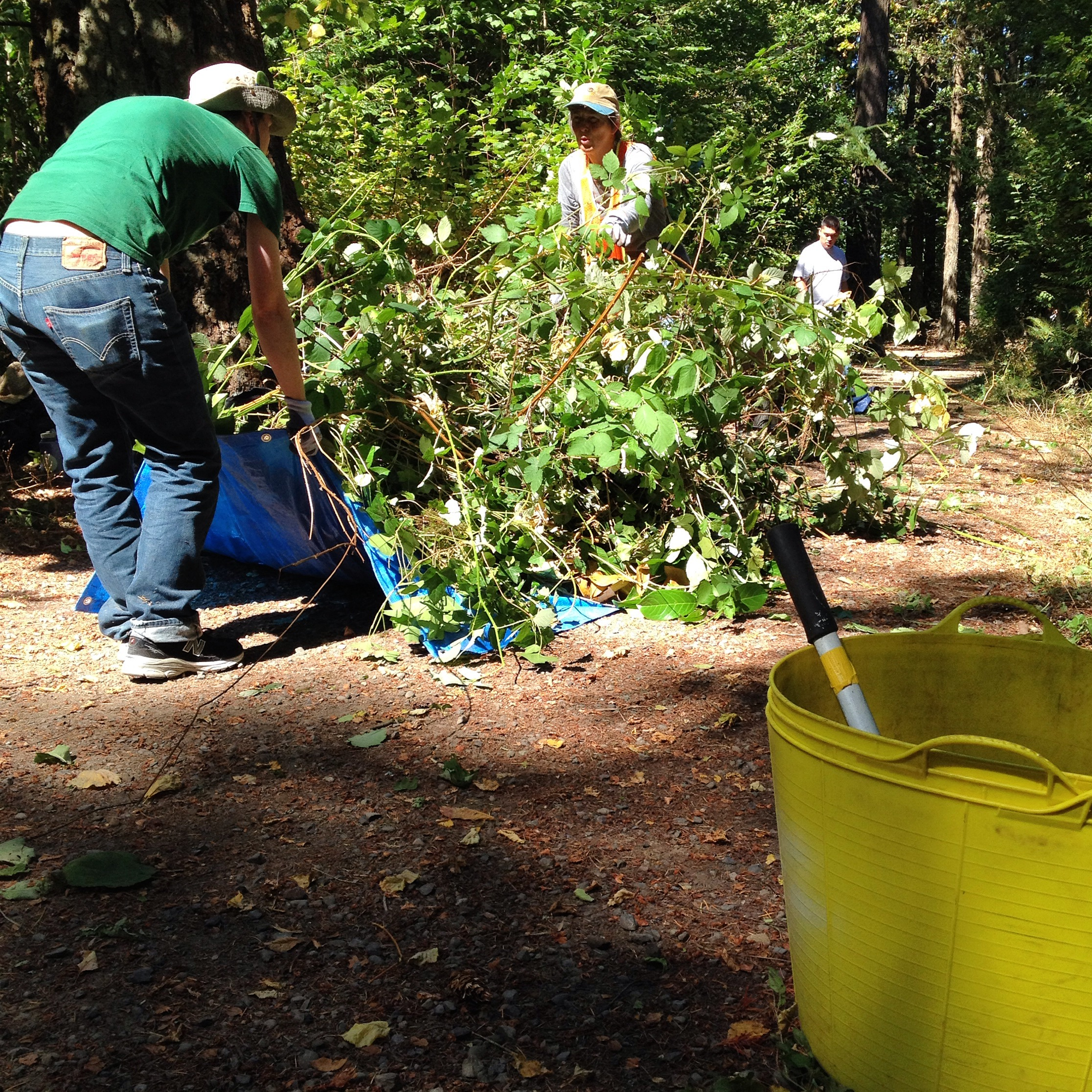 Removing invasive species at Nadaka Nature Park