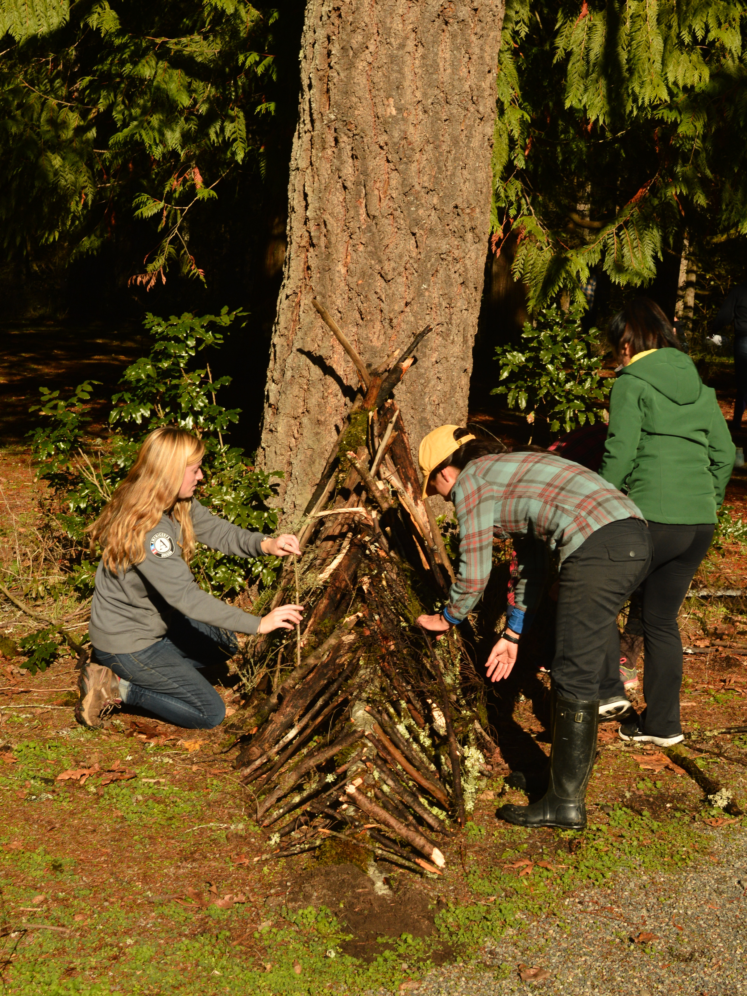 The beginning stages of an emergency leaf shelter