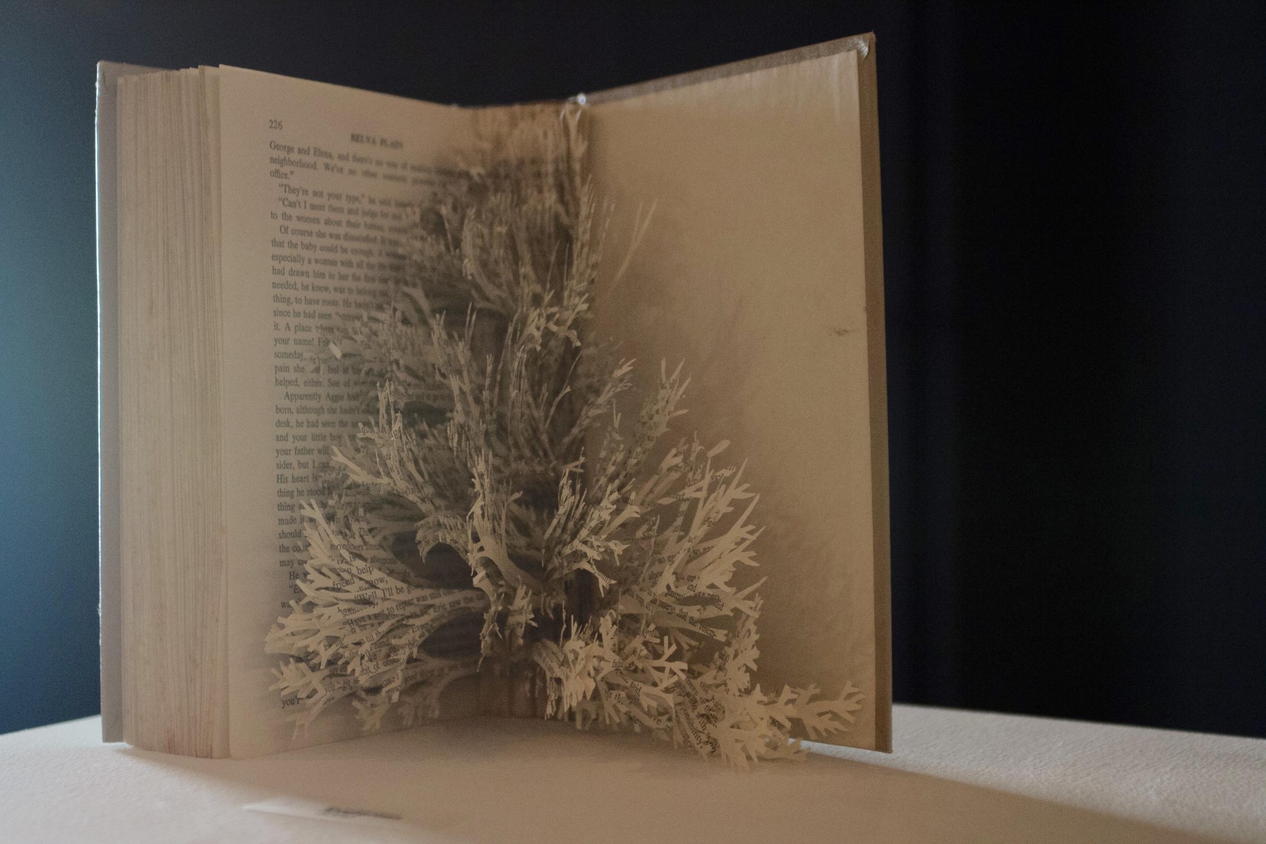 Evergreen  by Sarah Dresser.