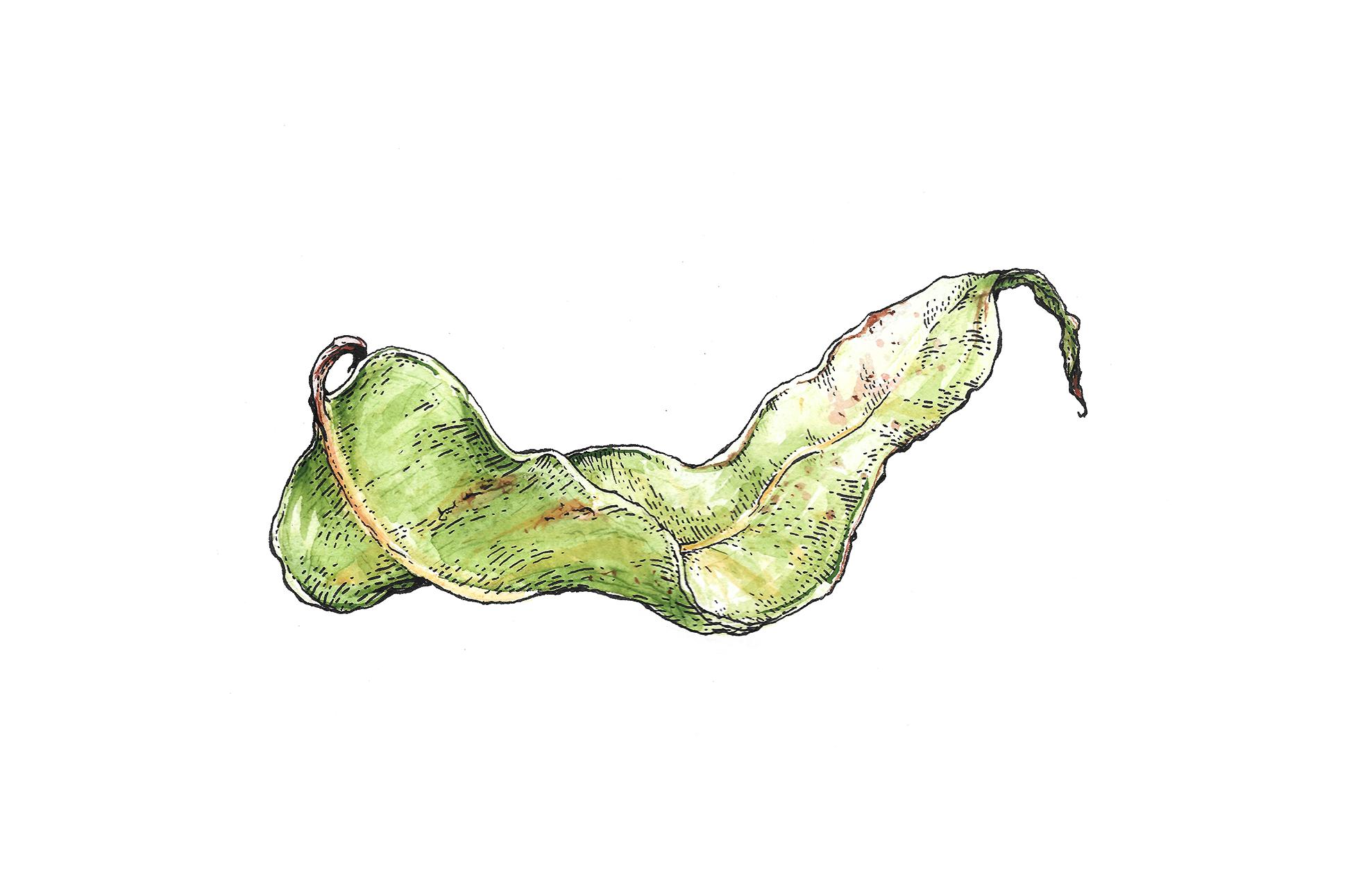 I Love Gum Leaves