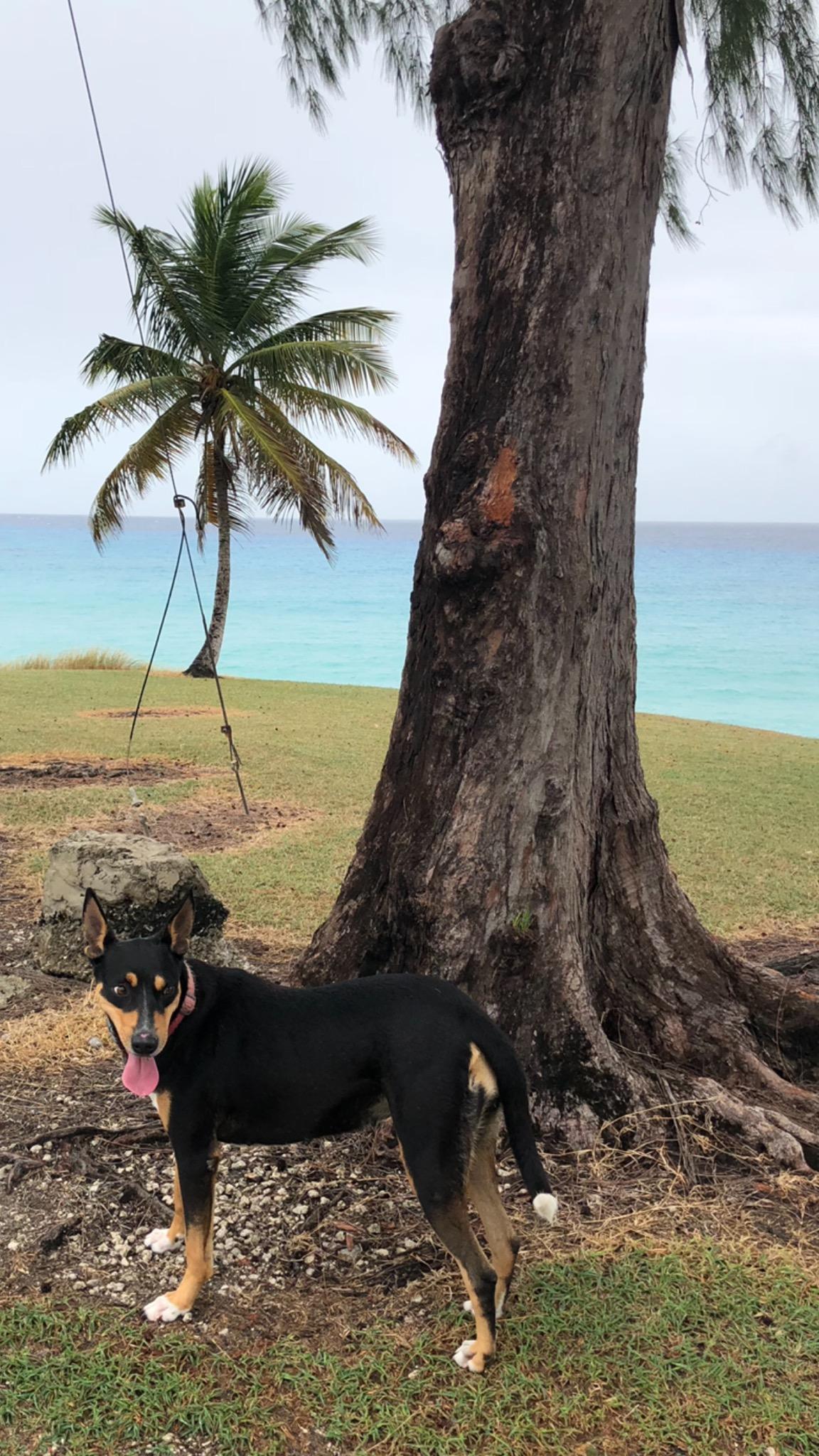 beachdog.jpeg