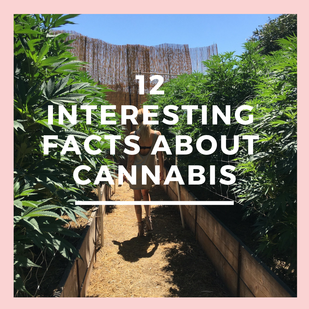 CANNABIS FACTS.png