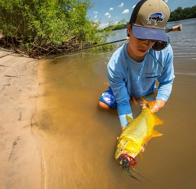 "Throwback to casting heavy Andino Flies under the ""Sarandí"" bushes lining the banks of Uruguay's Rio Negro. Nothing feels quite as improbable as the unmitigated beauty of a Golden Dorado. #flyfishing #goldendorado #keepemwet #tbt"