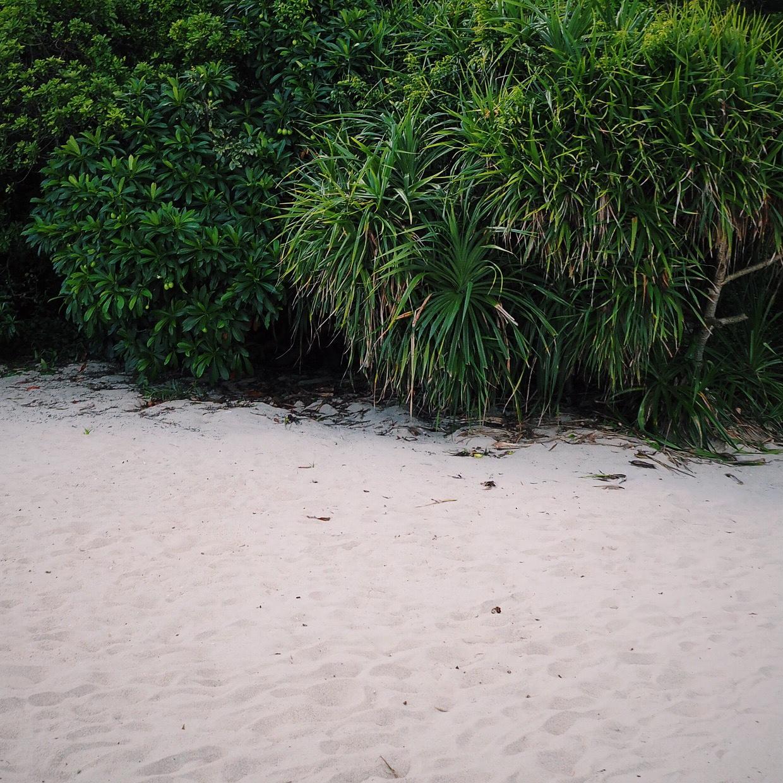 beach and bush