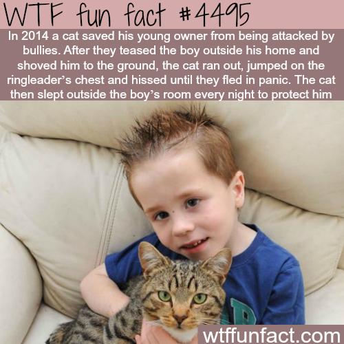 kitty hero.png