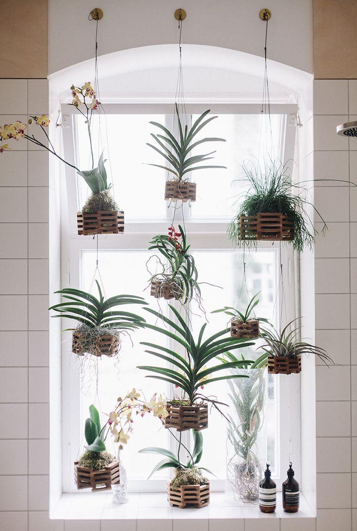 hanging orchids blog interior.jpg