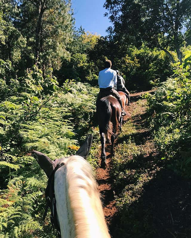 Magical time trotting around the forests in Malawi 🌲🐴🇲🇼
