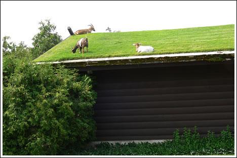 green-home-living-roof-2.jpg