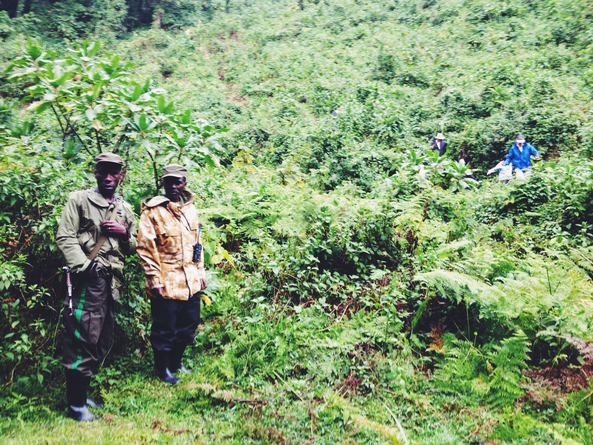 Virunga national park guide and tracker.
