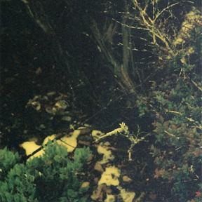 Knight Owl  2007