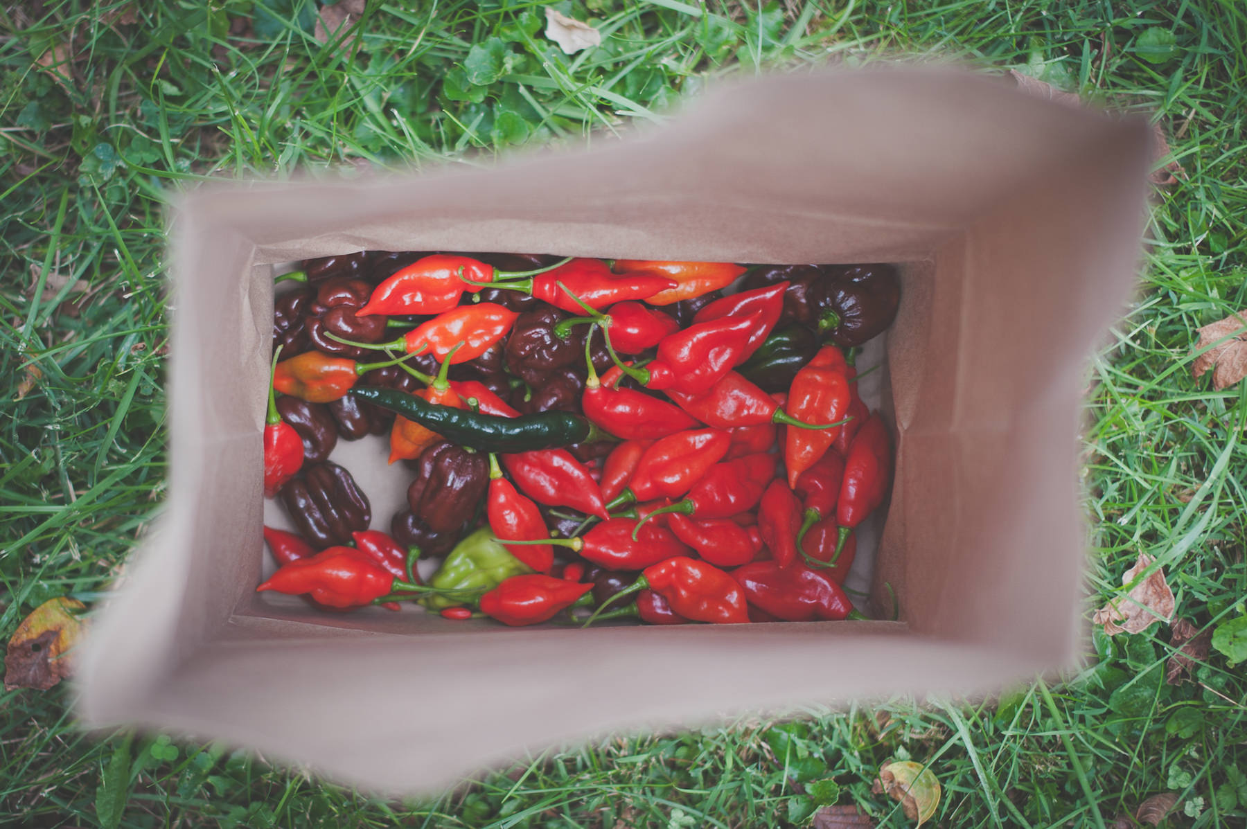 A few of the homegrown peppers that Candice and her family graced us with during our visit.