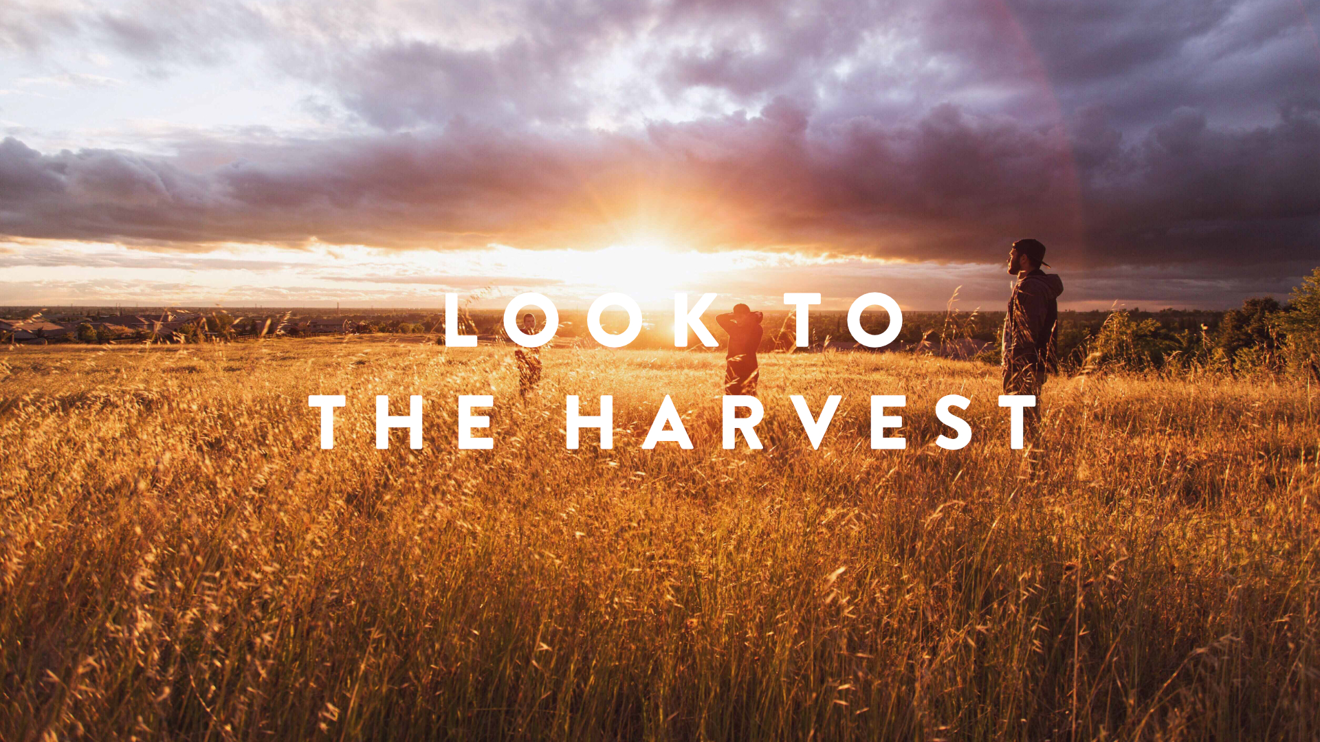 Look To The Harvest.jpg