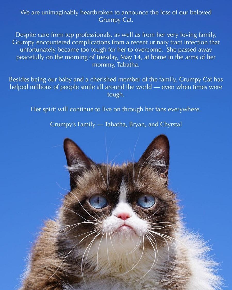 Запись в Instagram о смерти Grumpy Cat   ©realgrumpycat, instagram.com