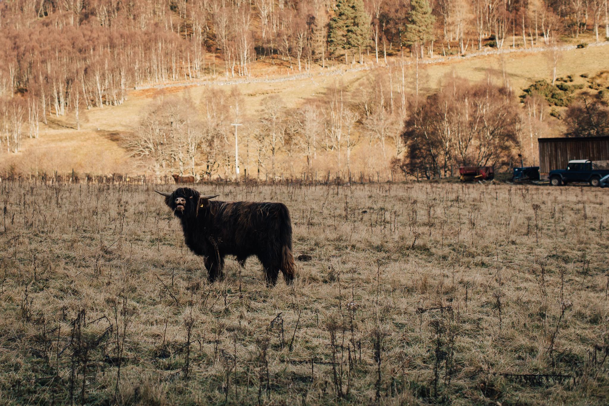 Skotland-blog-030.jpg