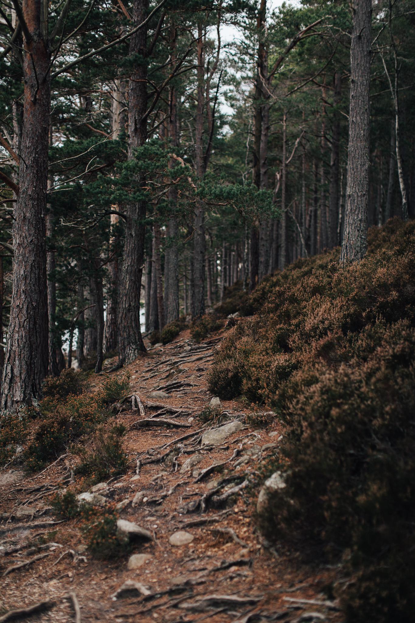 Skotland-blog-064.jpg