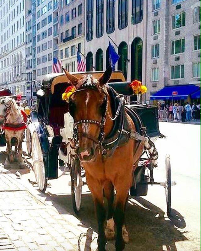 等不及夏天的紐約街頭🐎  nyc#hellocities #hellonyc#nyctour #nycguide #nycstreetviews #紐約深度旅遊 #紐約行程客製化#亞洲到紐約#ニューヨーク観光 #ニューヨークガイド#