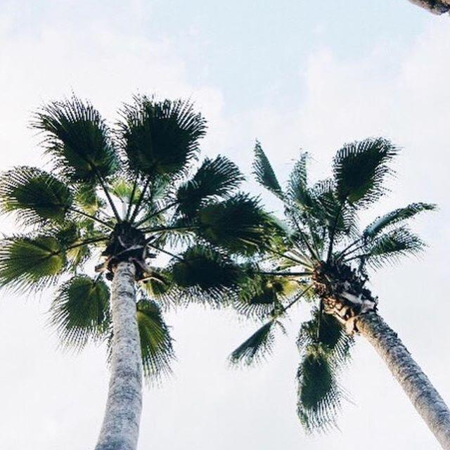 The days are longer and the sky is brighter! Spring is coming 🌴  #travel #travelblogger #travelbloggernyc #jammxiv #jammxivbracelet #leathergoods #leathergoods #smallleathergoods #mensleather #leatheraccessories #mensstyle #leathercraft #nycstyle #nycstreetstyle #cardholders #keyring #leatherfashion #mensfashion #wristaction #whatsonyourwrist #armcandy #leather #bracelets #braceletstacks